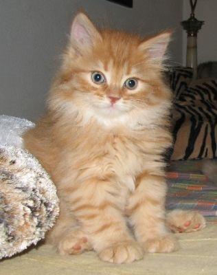Gattini rossi regalo pisa