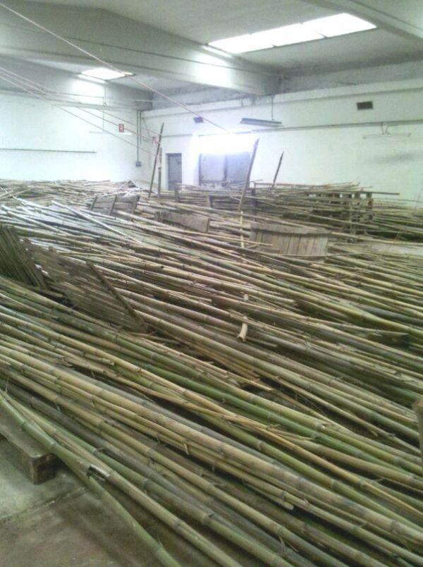 In vendita canne di bamb bambu con diametri da 1 a 10 cm for Vendita bambu