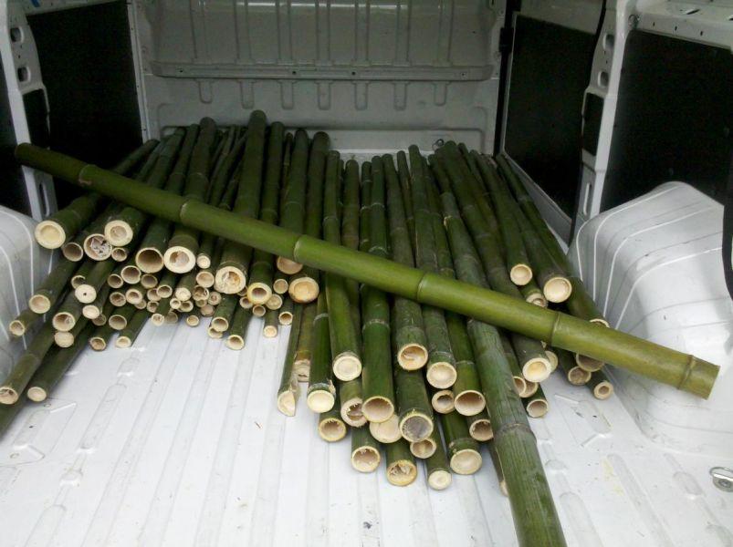 In vendita canne di bamb bambu con diametri da 1 a 10 cm for Canne di bamboo da arredo