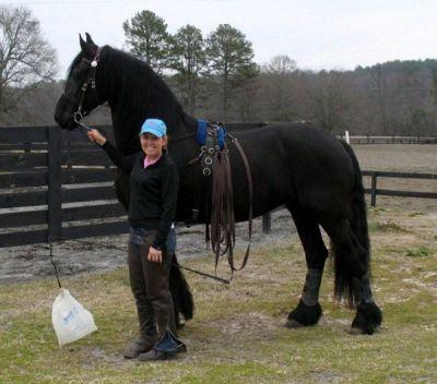Regalo bellissimo cavallo frisone per la 39 adozione gratis for Regalo mobili gratis