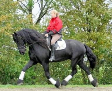 Wow cavallo frisone for Giardino wow ferrara