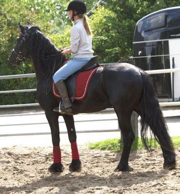 Cavallo frisone in vendita for Cavalli bolzano