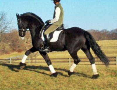 Sani cavalli frisone in vendita for Cavalli bolzano